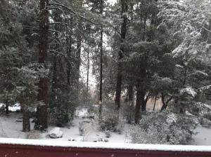 Snowy Glade