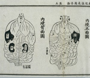 Internal organs, from the Daoist Canon, 15th century Chinese, from Wellcomeimages.org